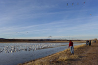 Photographers & Snow Geese